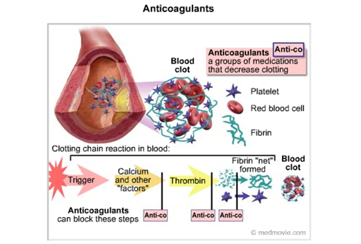 a-fib, blood thinners, stroke, afib